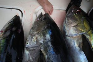 CFP- Yellowfin on Deck!!