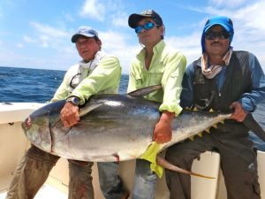 Yellowfin