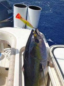 Tuna, popper