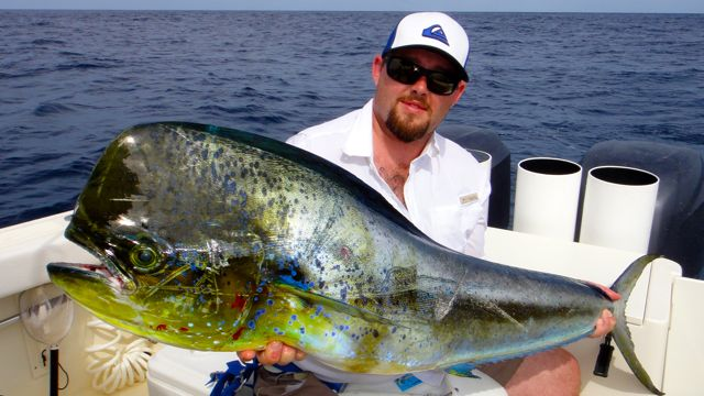 Panama's Best Action Dorado Photos - Come Fish Panama