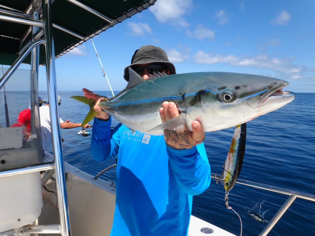 Panama 39 s best rainbow runner photos come fish panama for Small fishing sponsors