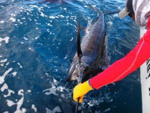 CFP- Kevin's Marlin Boatside