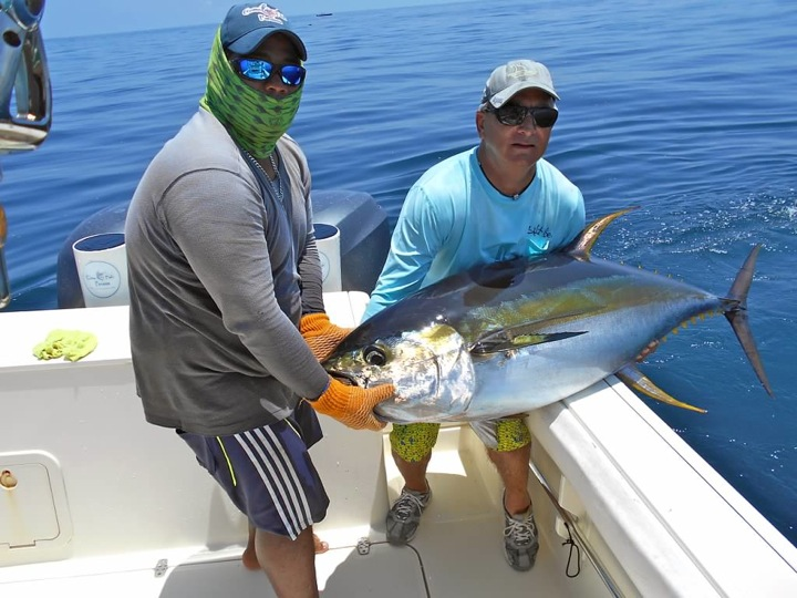 Yellowfin tuna fishing in panama panama fishing reports for What does a tuna fish look like