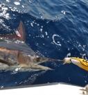 Marlin Fishing Panama